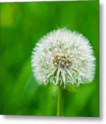 Blowball Of Dandelion - Featured 3 Metal Print