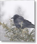 Blowin' In The Wind - Crow Metal Print