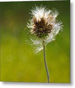 Blowing In The Wind Metal Print