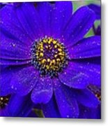Blue And Bright Metal Print
