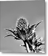Blue And Green Bw Green Plant In Front Of A Blue Sky Metal Print