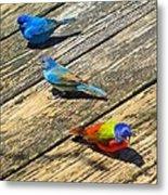 Blue And Indigo Buntings - Three Little Buntings Metal Print