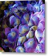 Blue And Purple Hydrangeas Metal Print