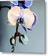 Blue And White Orchids Metal Print