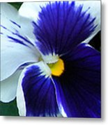 Blue And White Pansy Metal Print