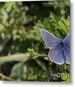 Blue Beauty Metal Print