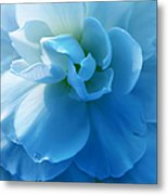 Blue Begonia Flower Metal Print by Jennie Marie Schell
