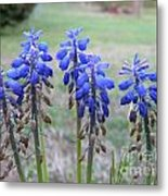Blue Bells 1 Metal Print