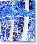 Blue Birch Trees Metal Print