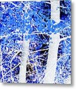 Blue Birch Trees Metal Print
