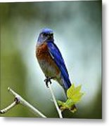 Blue Bird Halo Metal Print