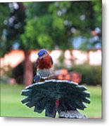 Blue Bird - I'm Looking At You Kid Metal Print