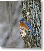 Blue Bird In Winter Metal Print