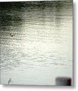 Blue Bird Over The Water...   # Metal Print