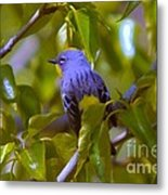Blue Bird With A Yellow Throat Metal Print
