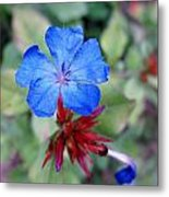 Blue Bloom Metal Print