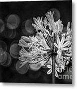 Blue Blooms B/w Metal Print