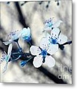 Blue Blossoms Metal Print