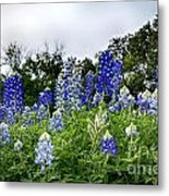 Blue Bonnet Carpet V9 Metal Print