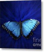 Blue Butterfly Ascending 02 Metal Print