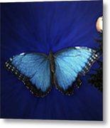 Blue Butterfly Ascending Metal Print