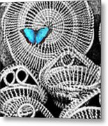 Blue Butterfly Charleston Metal Print