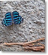 Blue Butterfly Myscelia Ethusa Art Prints Metal Print
