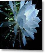 Blue Cereus Metal Print