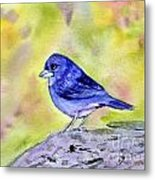 Blue Chaffinch Metal Print
