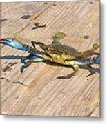 Blue Crab On Dock Assateague Island Md Metal Print