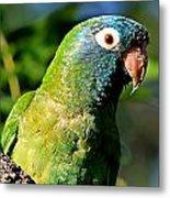 Blue-crowned Parakeet Metal Print by Ira Runyan