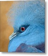 Blue Crowned Pigeon Metal Print