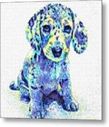 Blue Dapple Dachshund Puppy Metal Print by Jane Schnetlage