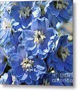 Blue Delphinium 9656 Metal Print