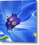 Blue Delphinium Metal Print