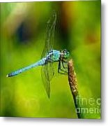 Blue Dragonfly 2 Metal Print