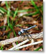 Blue Dragonfly Beauty Metal Print by Ella Char