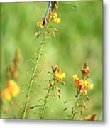 Blue Dragonfly In The Flower Garden Metal Print