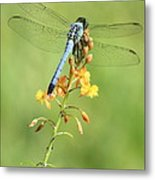 Blue Dragonfly On Yellow Flower Metal Print