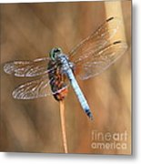 Blue Dragonfly Square Metal Print