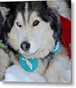 Blue Eye Brown Eye Metal Print
