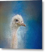 Blue Eyed Beauty - White Ostrich - Wildlife Metal Print