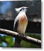 Blue Eyed Bird Metal Print