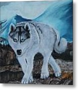 Blue Eyed Husky Metal Print