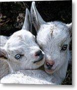 Blue-eyed Twins Metal Print