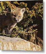 Blue Eyes Baby Fox Metal Print