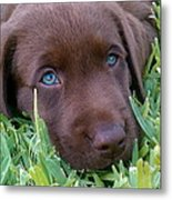 Blue Eyes Dreaming Metal Print