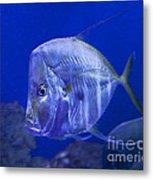 Blue Fish   #4990 Metal Print