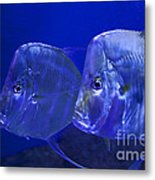 Blue Fish   #4991 Metal Print