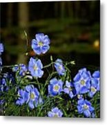 Blue Flax By The Pond Metal Print